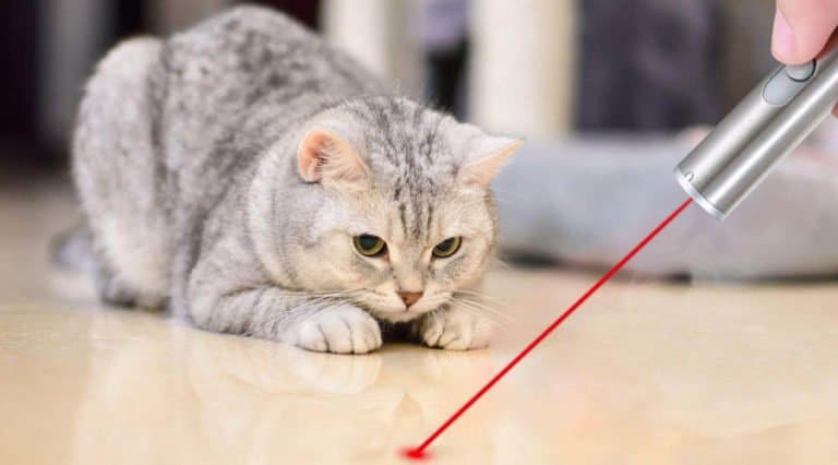 laser-pointers-for-cats