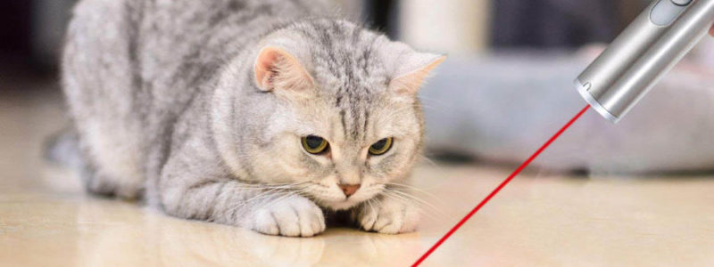Best Laser Pointer For Cats